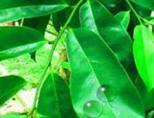 air daun